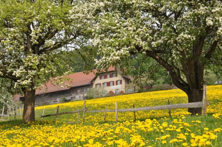 Jura Frühling