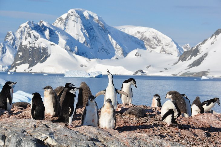 Chinstrap Penguins on Orne Island