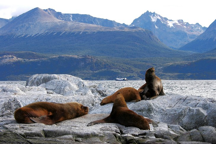 Sea lions in the Beagle Channel